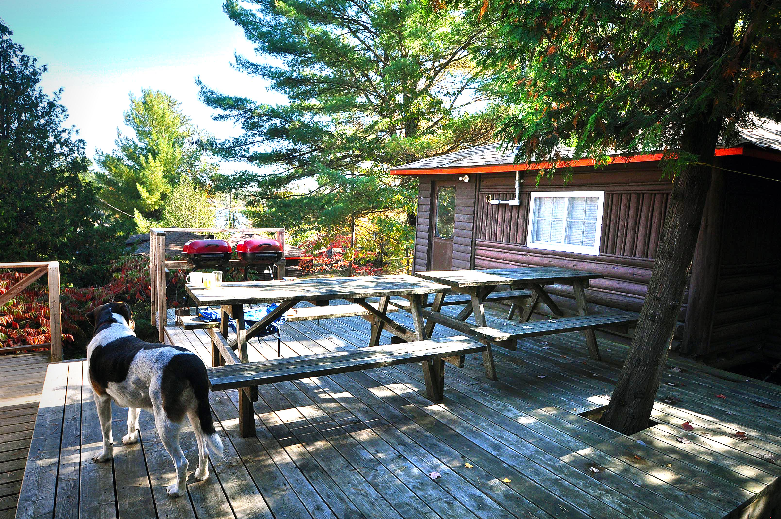 Cabin 13 - deck, two picnic tables and a dog.